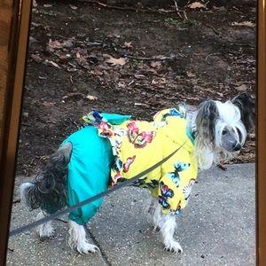 Dogs suit